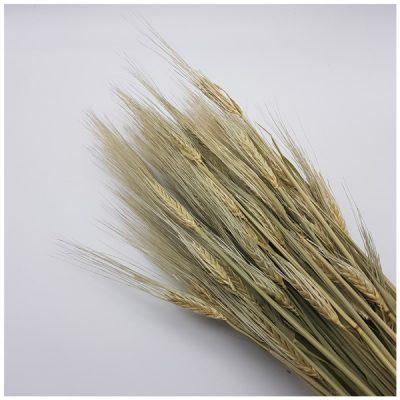 Strauß Trockenblumen - Weizen natur